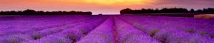 cropped-lavendersunset1.jpg