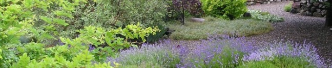 cropped-artists-garden-with-lavender-path-banner1